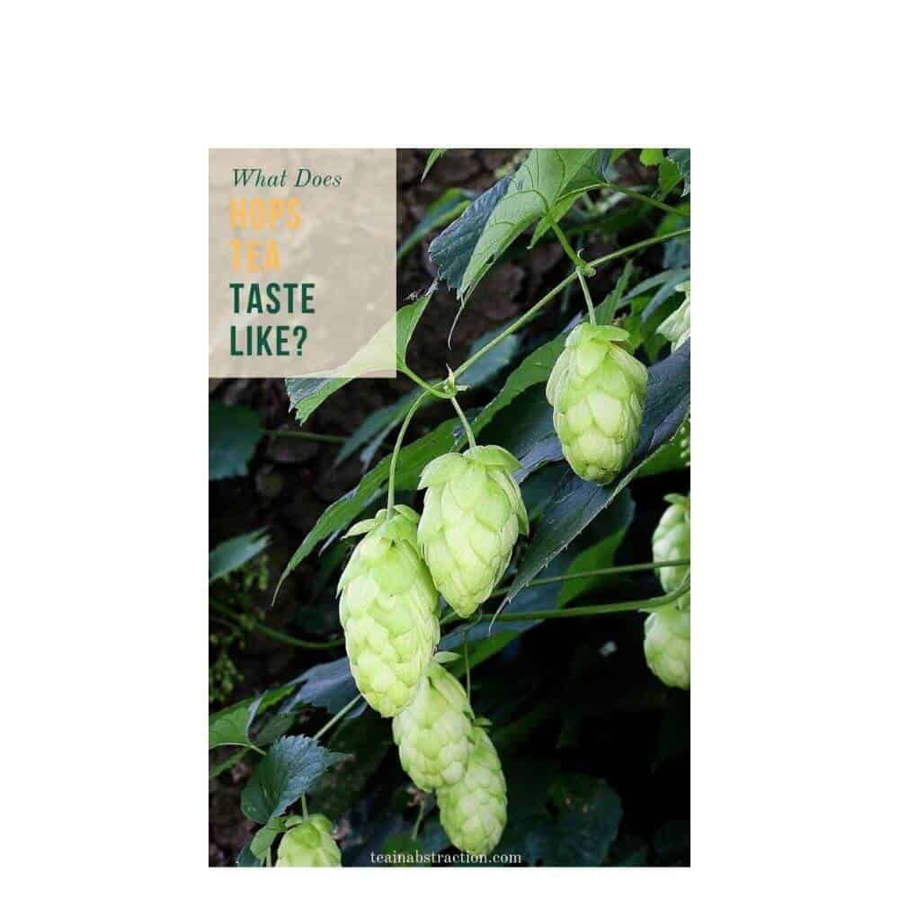 hops tea flavor profile featured image