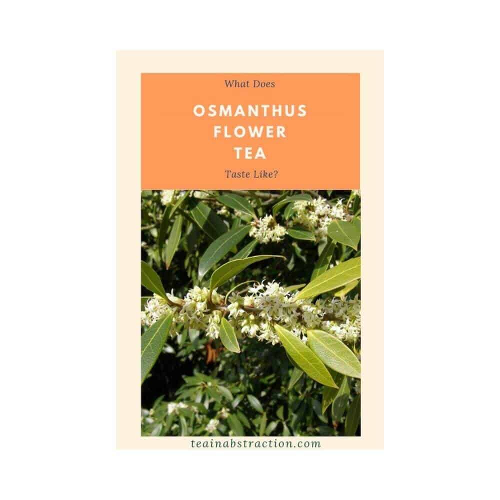 osmanthus tea featured image