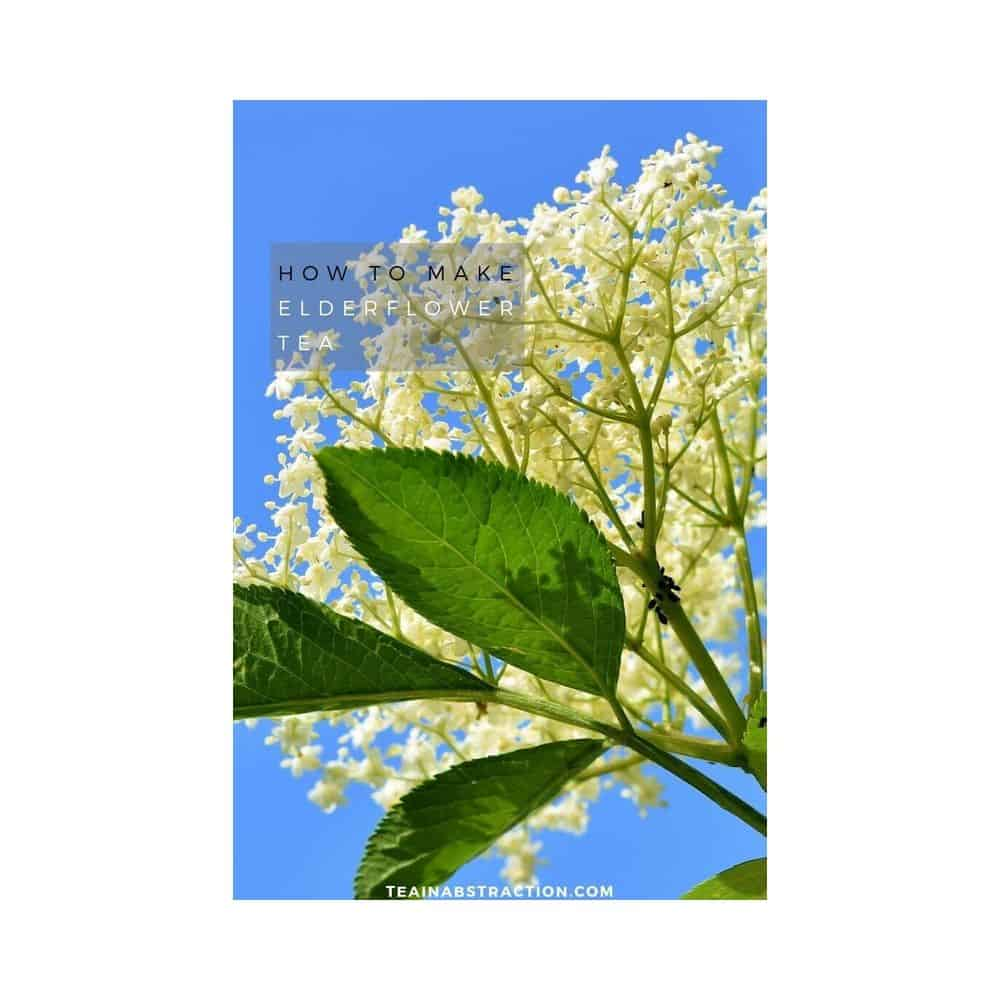 elderflower tea featured image