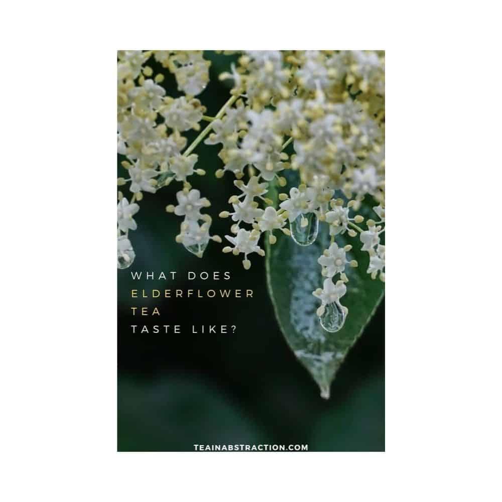 elderflower in rain featured image