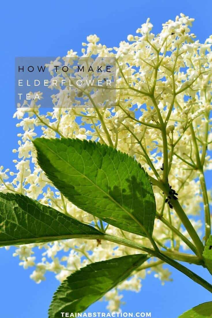 how to make elderflower tea pinterest image