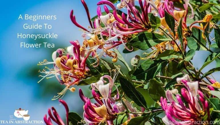 honeysuckle flower tea benefits featured image