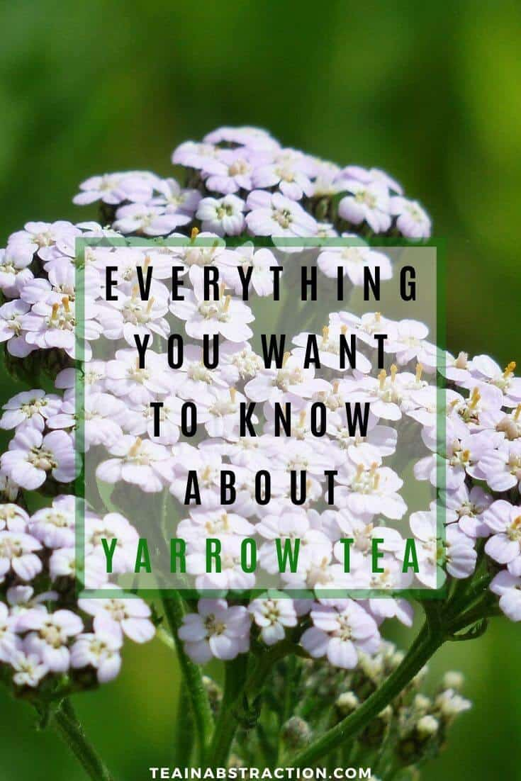 yarrow tea benefits everything you need to know pinterest image