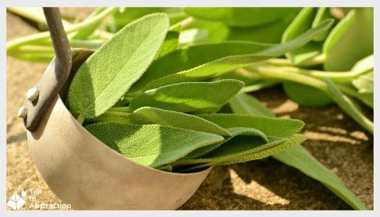 metal ladle full of fresh sage leaf