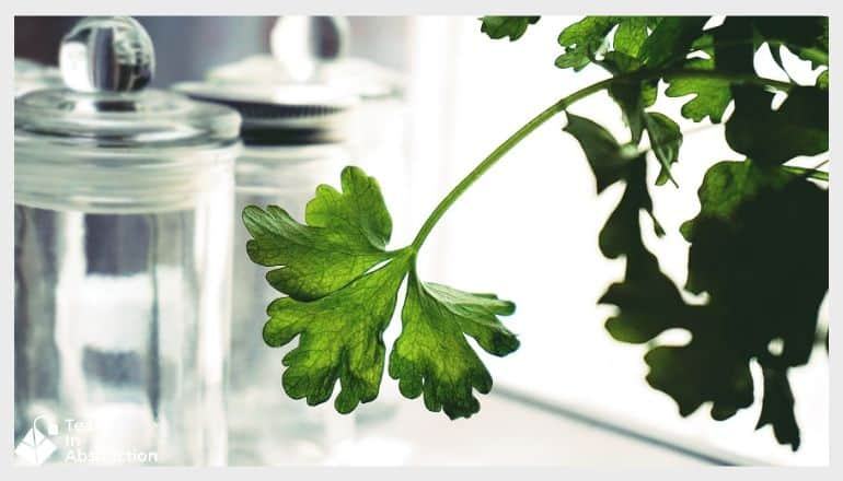 a sprig of parsely in front of some clear jars next to a window