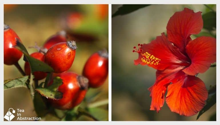 image of rosehips and hibiscus flowers