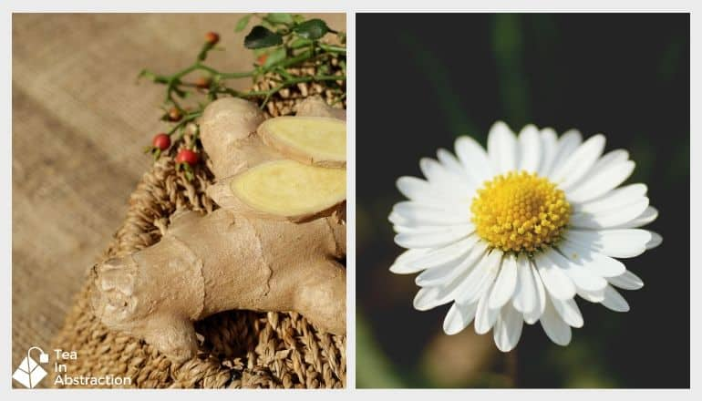 ginger root and a chamomile flower