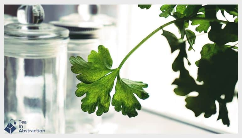 a parsley leaf hanging in front of glass containers