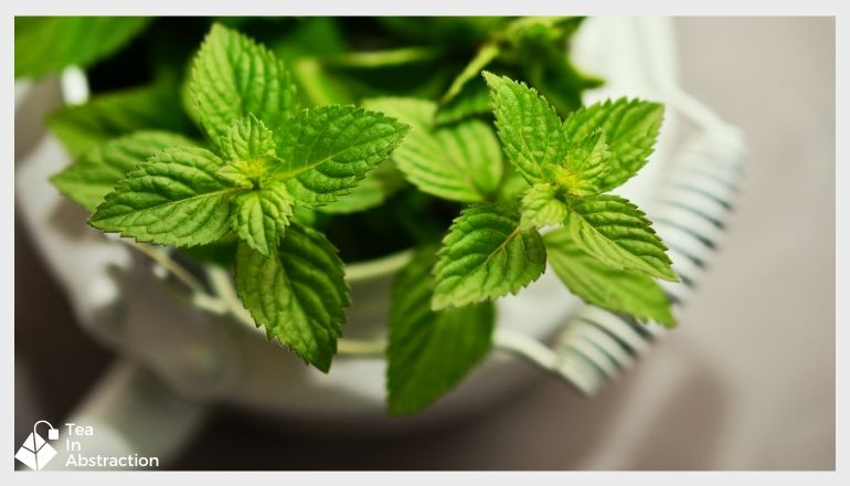 peppermint leaves in a white cup