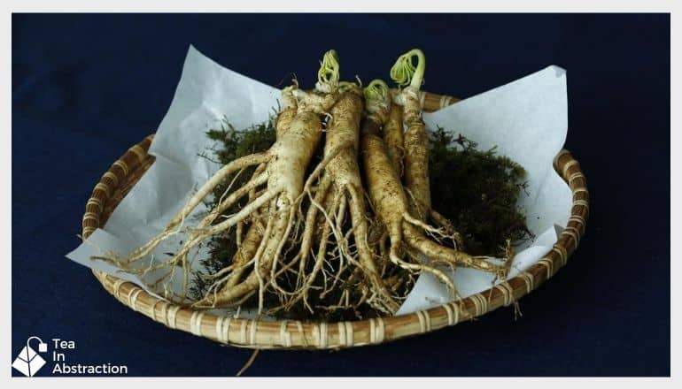 fresh ginseng root on a plate