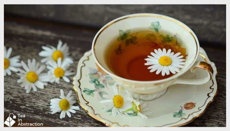 chamomile tea in a white cup on a saucer with a fresh chamomile flower in the cup. chamomile flowers are also strewb about the table next to the cup